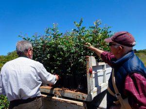 Plantación Algarrobos
