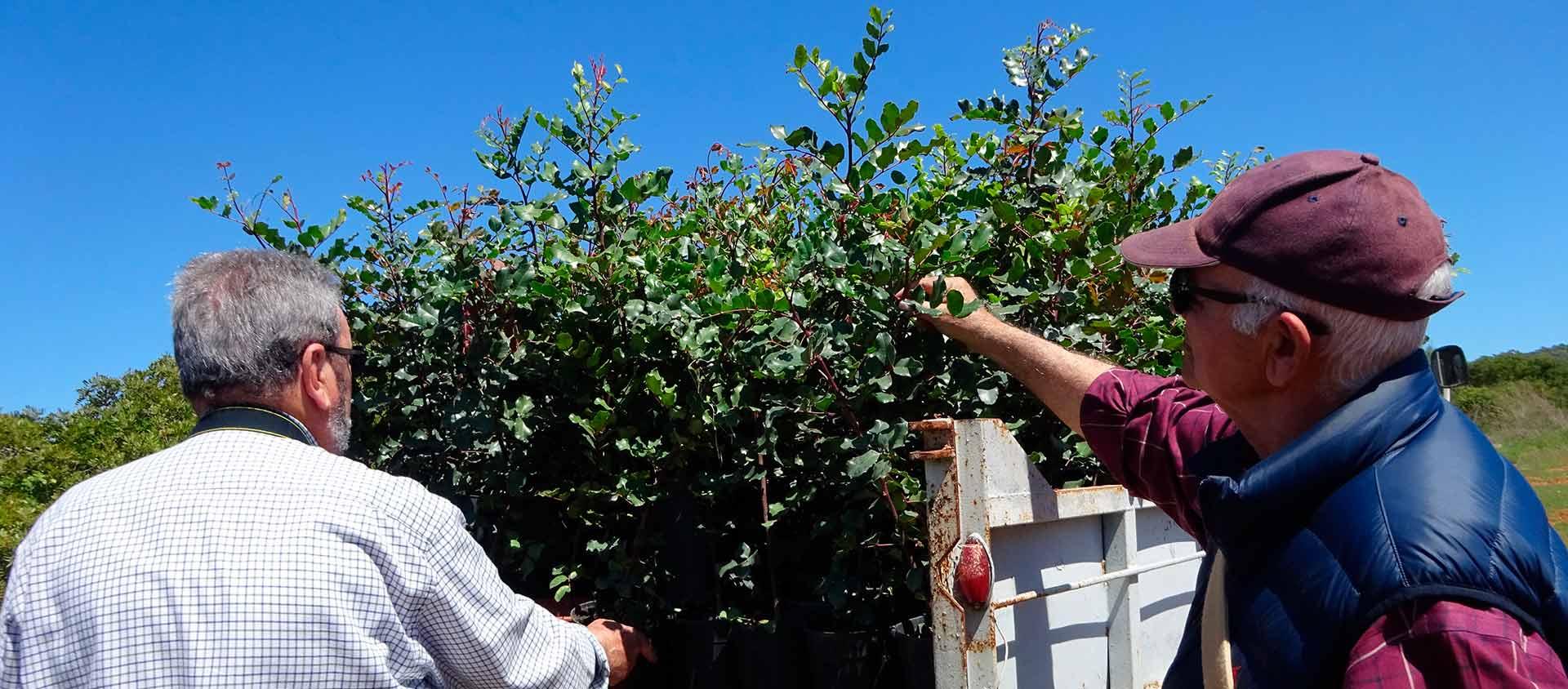 Plantación libre de pesticidas y  químicos